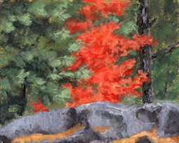 Little Red Maple Oil on Panel